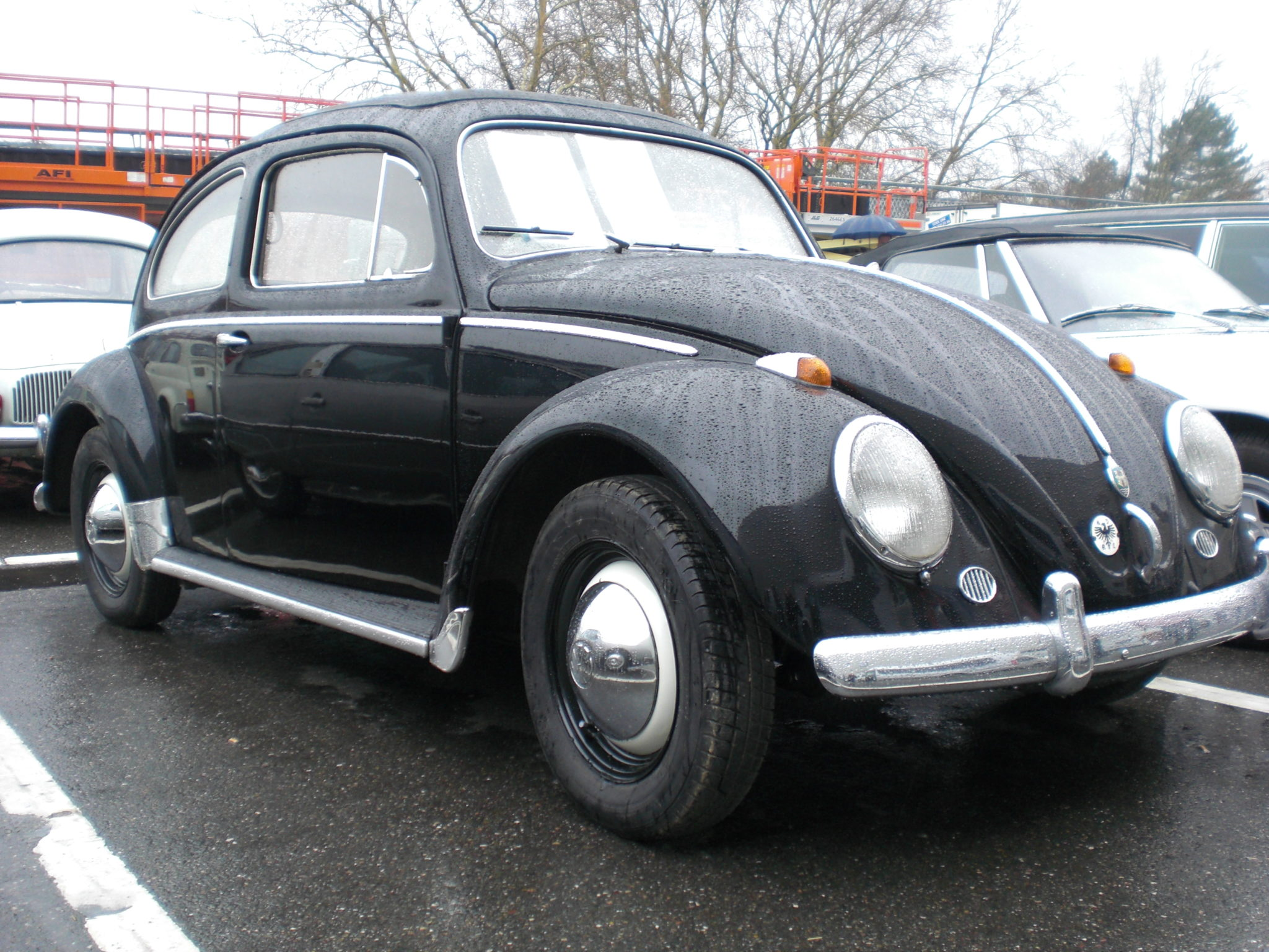 Reckteckkäfer 1958_2